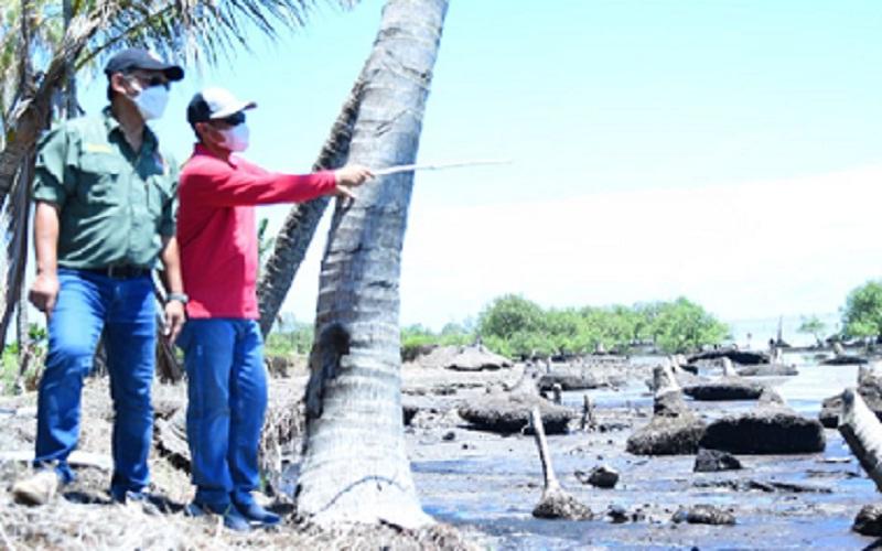 Wakil Bupati Bengkalis, Bagus Santoso sedang meninjau wilayah yang terdampak abrasi. Pemkab meminta bantuan pemerintah pusat agar abrasi dapat tertangani. -  Istimewa