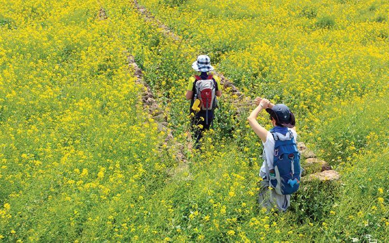 Jalur pendakian di Pulau Jeju, Korea Selatan.  - Koreatimes