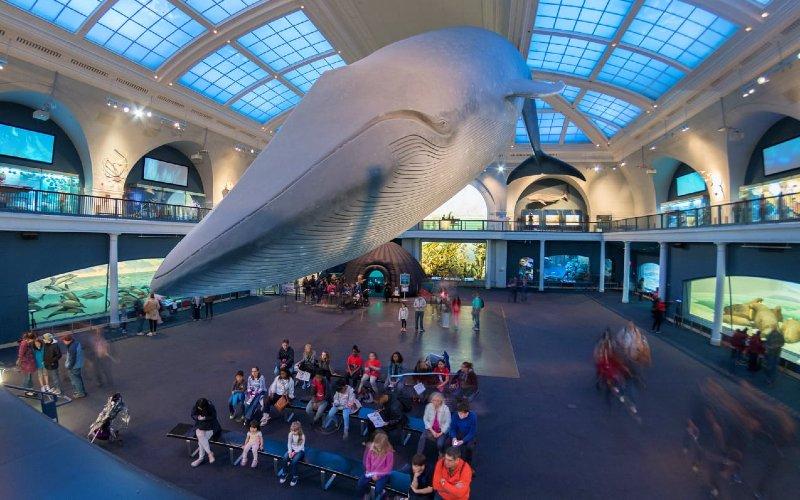 Museum Sejarah Alam Amerika di New York.  - lonelyplanet