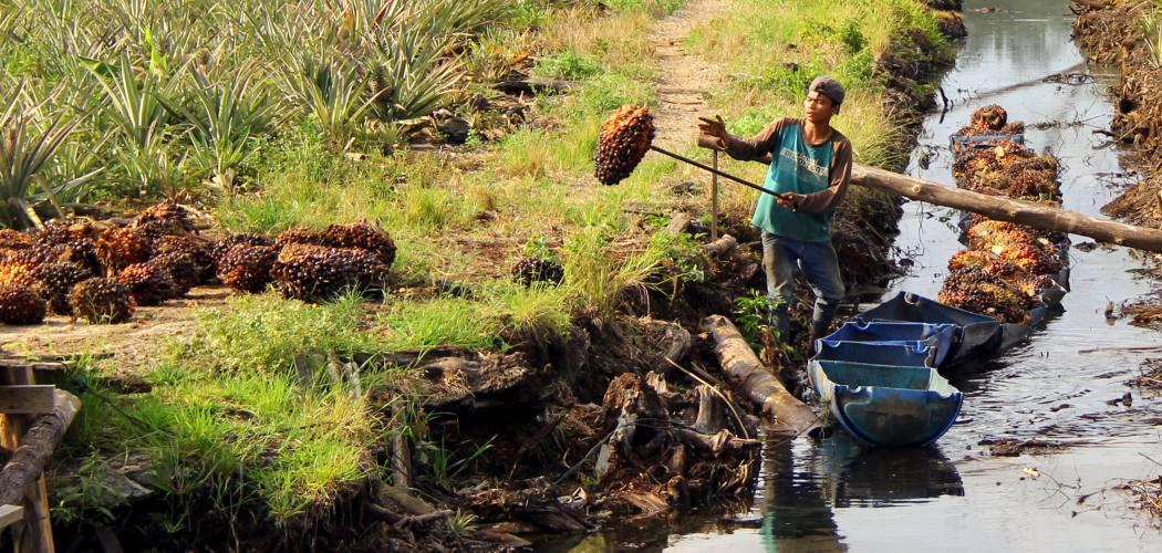 Seorang pekerja membongkar muat Tandan Buah Segar (TBS) kelapa sawit dari dalam rakit di Desa Rantau Bais, Rokan Hilir, Riau, Senin (8/3/2021).  - ANTARA FOTO/Aswaddy Hamid