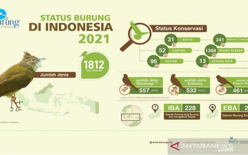 Ilustrasi: Burung Indonesia dengan perkembangan populasinya. - ANTARA/Humas Burung Indonesia