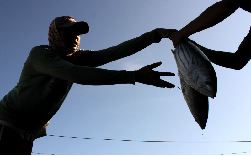 Nelayan mengangkut ikan hasil tangkapannya di Tempat Pelelangan Ikan (TPI) Paotere, Makassar, Sulawesi Selatan, Senin (20/4 - 2020). Harga ikan di daerah ini turun dari rata/rata Rp450 ribu menjadi Rp300 ribu / Rp250 ribu per keranjang akibat minimnya permintaan pasar serta melimpahnya hasil tangkapan. / ANTARA