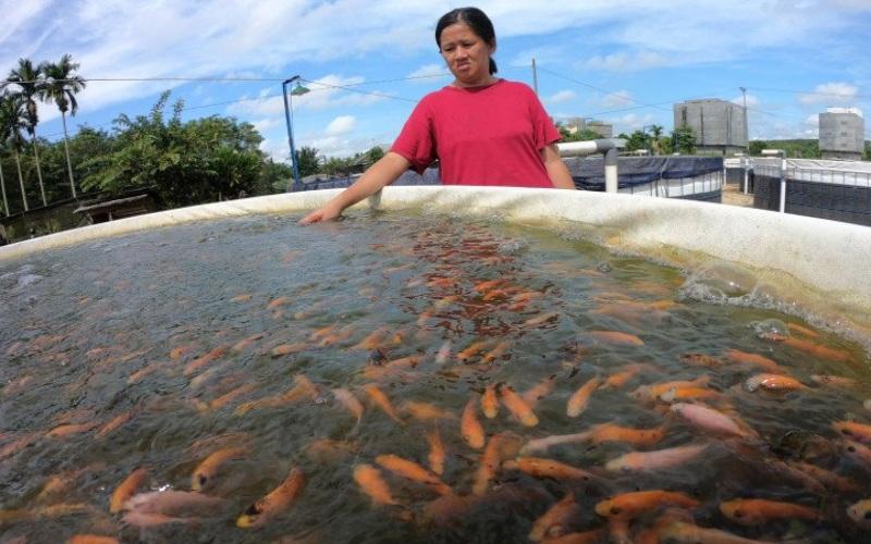 Ilustrasi - Warga memeriksa kondisi ikan nila berumur tiga minggu yang dibudidayakan menggunakan sistem bioflok - Antara/Wahdi Septiawan
