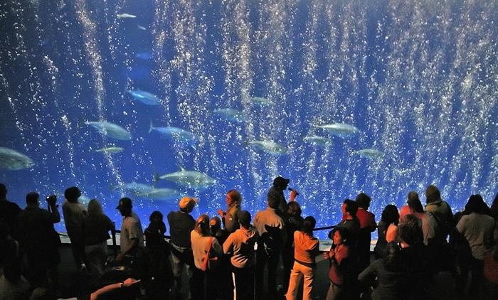 Aquarium Monterey Bay - istimewa