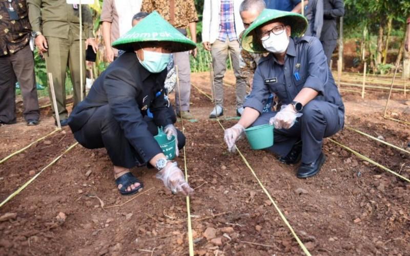 Penanaman perdana bibit jagung hibrida di Desa Cikasungka Kecamatan Cikancung, Kabupaten Bandung - Istimewa