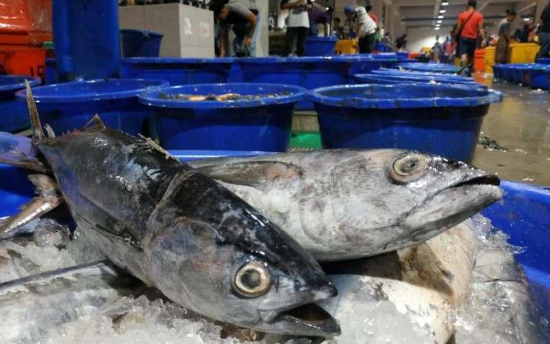 Tumpukan ikan di Pasar Ikan Modern. - istimewa