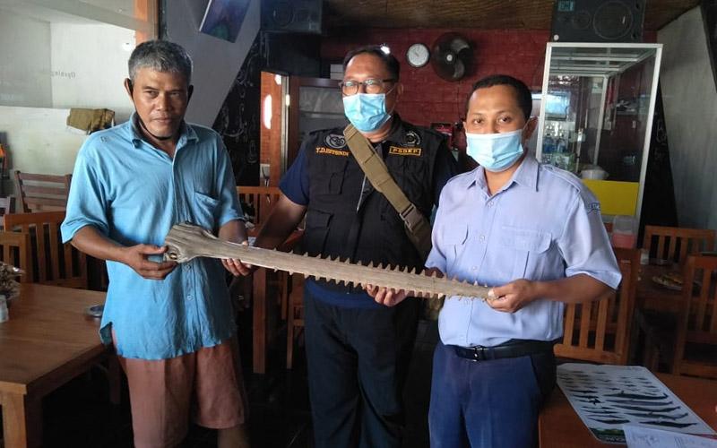 BPSPL Denpasar mengamankan moncong Pari Gergaji yang dimiliki oleh salah satu warung di Kecamatan Kuta Selatan. -  Dok. KKP