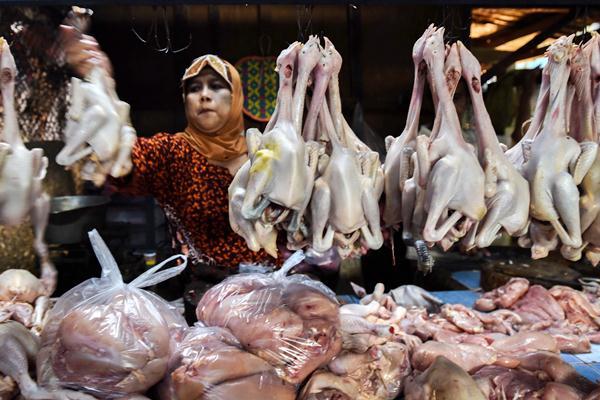 Pedagang daging ayam. - Antara/Zabur Karuru