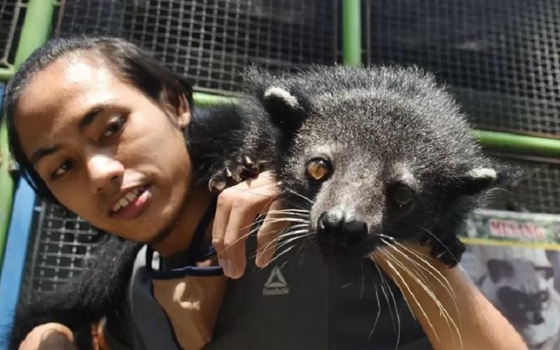 Pawang satwa bermain dengan Binturung (Arctictis binturong) di Kebun Binatang Madiun Umbul Square Kabupaten Madiun, Jawa Timur, Rabu (13/5/2020). - Antara