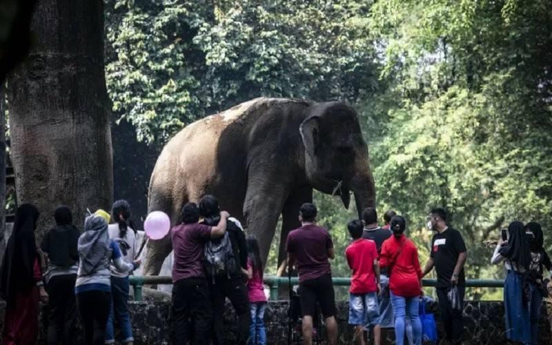 Sejumlah wisatawan menyaksikan Gajah sumatra (Elephas maximus sumatranus) di Taman Margasatwa Ragunan, Jakarta, Kamis (14/5/2021). - Antara\r\n