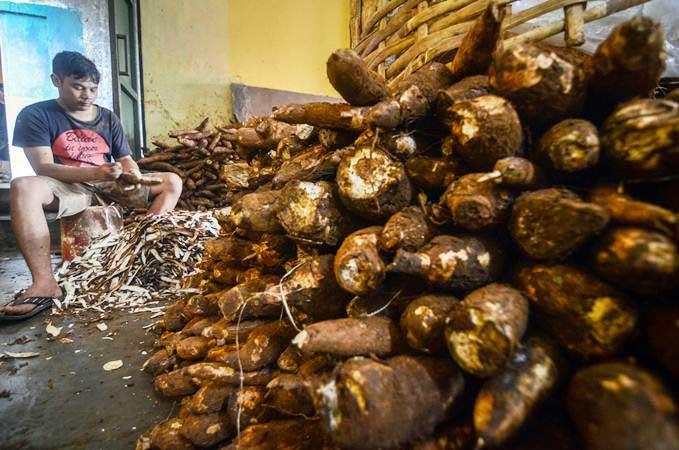 Pekerja mengupas singkong untuk dijadikan keripik di Sentra Keripik Singkong Cimahi, Jawa Barat, Jumat (1/3/2019). - ANTARA/Raisan Al Farisi