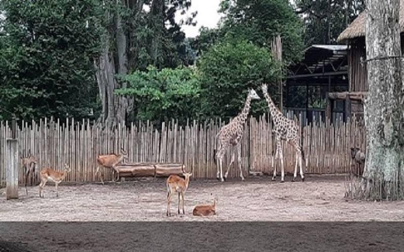 Kebun Binatang Bandung. - Pemprov Jabar