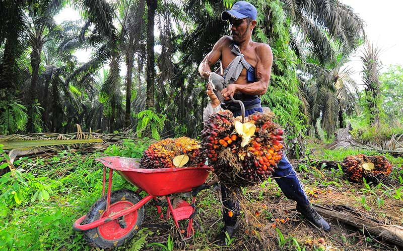 Pekerja memuat tandan buah segar (TBS) kelapa sawit, di Petajen, Batanghari, Jambi, Jumat (11/12/2020). Dewan Minyak Sawit Indonesia (DMSI) memperkirakan nilai ekspor kelapa sawit nasional tahun 2020 yang berada di tengah situasi pandemi Covid-19 tidak mengalami perbedaan signifikan dibanding tahun sebelumnya yang mencapai sekitar 20,5 miliar dolar AS atau dengan volume 29,11 juta ton. ANTARA FOTO - Wahdi Septiawan