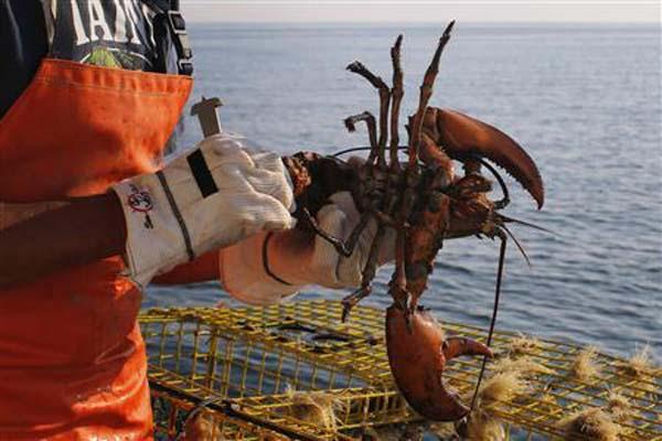 Ilustrasi lobster - Reuters