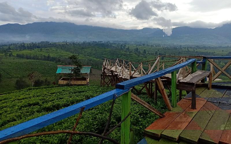 Puncak Nini menawarkan keindahan kebun teh - Bisnis