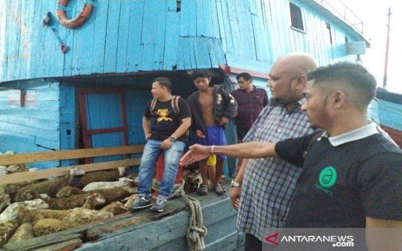 Domba asal Sumut siap diekspor ke Malaysia melalui Pelabuhan Tanjung Balai. - ANTARA/Evalisa Siregar