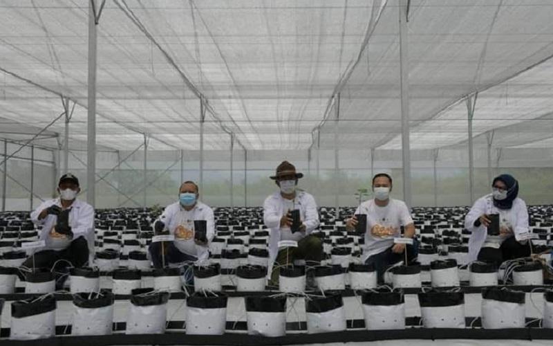 Konsep smart farming yang diterapkan program Petani Milenial Jabar - Istimewa
