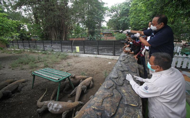 Direktur SDM PT Pelindo III Edi Priyanto (kedua kanan) memberi makan komodo di Kebun Binatang Surabaya, Jawa Timur, Senin (31/5/2021). PT Pelindo III berpartisipasi pada program orang tua asuh satwa (Otas) untuk komodo sebagai bentuk dukungan dalam pelestarian dan perawatan komodo yang ada di KBS. - Antara/Moch Asim.