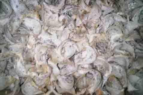 Ilustrasi sarang burung walet