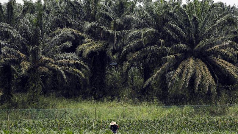 CSRA BMRI Cisadane Sawit Raya (CSRA) Dapat Fasilitas Kredit dari Bank Mandiri Rp345 Miliar - Market Bisnis.com