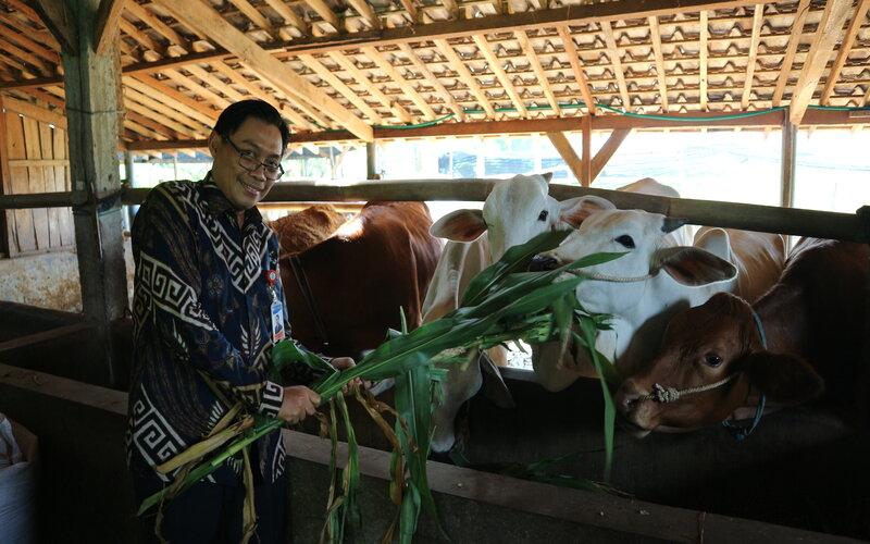 Kepala Perwakilan Bank Indonesia Azka Subhan Aminurridho menunjukkan sapi potong program Klaster Pembiakan Sapi Potong di Desa Senggreng Kecamatan Sumberpucung Kabupaten Malang. - Ist