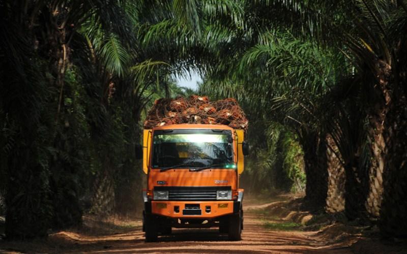 ANJT Austindo Jaya (ANJT) Alokasikan Capex US$42,8 Juta pada 2021 - Market Bisnis.com