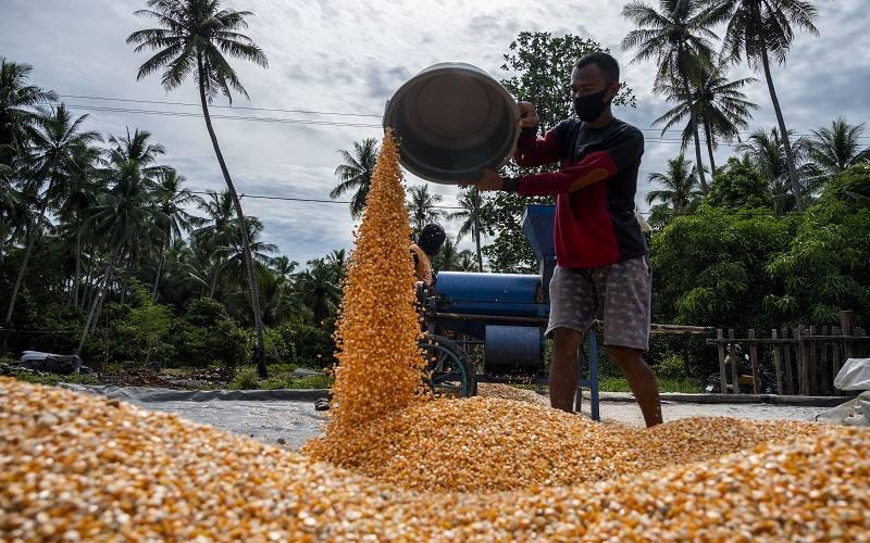 EDITORIAL : Pupuk Kinerja Sektor Pertanian