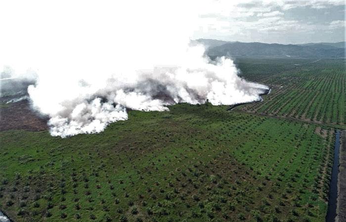 Foto udara kebakaran lahan gambut yang masuk di arel perkebunan sawit milik PT Sari di Kecamatan Lalolae, Kolaka Timur, Sulawesi Tenggara, Minggu (15/9/2019). Memasuki hari ke-17, pihak Manggala Agni Daerah Operasi Sulawesi Tenggara makin sulit memadamkan api akibat tiupan angin kencang dari timur-tenggara sehingga menyebabkan luas kebakaran terus bertambah mencapai 265 hektare. Antara/ManggalaAgni