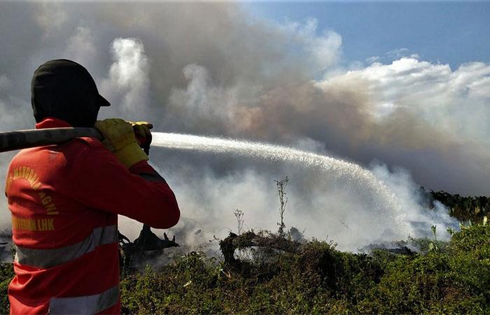 Personel Manggala Agni memadamkan kebakaran lahan gambut di Kecamatan Lalolae, Kolaka Timur, Sulawesi Tenggara, Minggu (15/9/2019). Memasuki hari ke-17, pihak Manggala Agni Daerah Operasi Sulawesi Tenggara makin sulit memadamkan api akibat tiupan angin kencang dari timur-tenggara sehingga menyebabkan luas kebakaran terus bertambah mencapai 265 hektare. Antara/ManggalaAgni