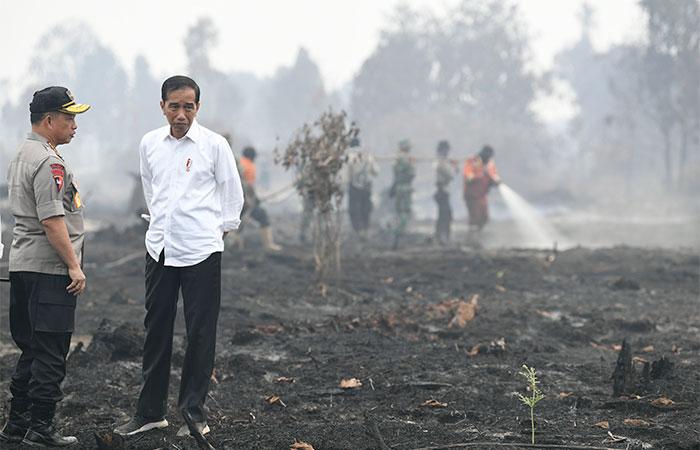 Presiden Joko Widodo (kanan) didampingi Kapolri Jenderal Pol Tito Karnavian meninjau penanganan kebakaran lahan di Desa Merbau, Kecamatan Bunut, Pelalawan, Riau, Selasa (17/9/2019). Pemerintah, melalui Polri, akan melakukan upaya penindakan hukum bagi pihak-pihak yang terbukti melakukan pelanggaran yang menyebabkan terjadinya kebakaran lahan. Antara/Puspa Perwitasari