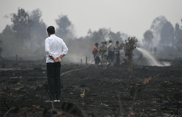 Presiden Joko Widodo meninjau penanganan kebakaran lahan di Desa Merbau, Kecamatan Bunut, Pelalawan, Riau, Selasa (17/9/2019). Pemerintah, melalui Polri, akan melakukan upaya penindakan hukum bagi pihak-pihak yang terbukti melakukan pelanggaran yang menyebabkan terjadinya kebakaran lahan. Antara/Puspa Perwitasari