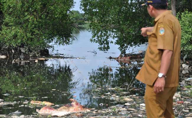 Petugas Dinas Ketahanan Pangan dan Peternakan Sumut menunjuk bangkai babi yang dibuang pemiliknya di Danau Siombak Marelan, Medan, Sumatera Utara, Senin (11/11/2019). Data Dinas Ketahanan Pangan dan Peternakan Sumut mencatat sedikitnya ada 4.682 babi mati yang diduga akibat wabah virus Hog Kolera dan African Swine Fever atau demam babi Afrika di 11 kabupaten/kota di Sumut. ANTARA FOTO/Septianda Perdana