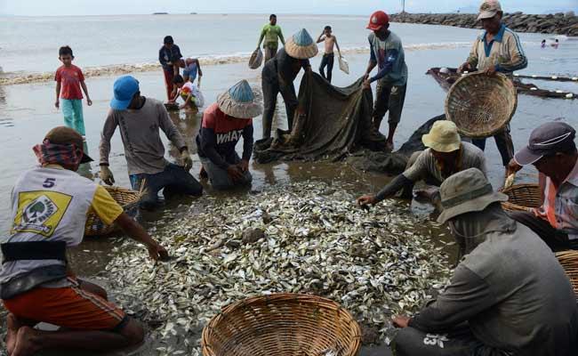 Nelayan memilih ikan di perairan Kampung Jawa, Banda Aceh, Aceh, Jumat (29/11/2019). Nelayan tradisional menyatakan, hasil tangkapan ikan sejak sepekan terakhir menurun akibat perubahan musim yang mengakibatkan perairan berlumpur. ANTARA FOTO/Ampelsa