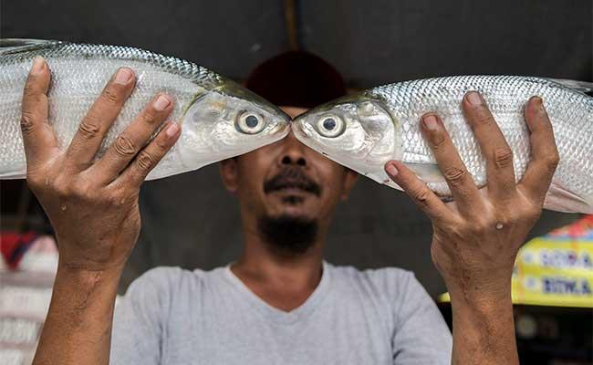 Pedagang menunjukkan ikan Bandeng dagangannya jelang perayaan Hari Raya Imlek di sepanjang jalan Rawa Belong, Jakarta, Rabu (22/1/2020). Masyarakat keturunan Tionghoa meyakini bahwa mengkonsumsi ikan bandeng saat perayaan Hari Raya Imlek dapat membawa keberuntungan dan rezeki. Ikan tersebut dijual dengan harga Rp65.000 hingga Rp85.000 per kilogram. ANTARA FOTO/Galih Pradipta