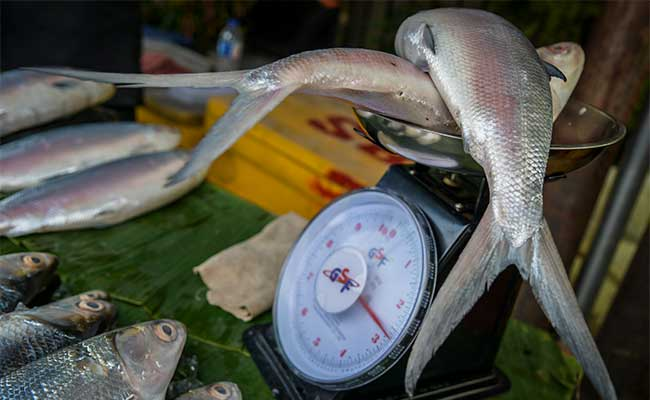 Pedagang musiman menjual ikan Bandeng jelang perayaan Hari Raya Imlek di sepanjang jalan Rawa Belong, Jakarta, Rabu (22/1/2020). Masyarakat keturunan Tionghoa meyakini bahwa mengkonsumsi ikan bandeng saat perayaan Hari Raya Imlek dapat membawa keberuntungan dan rezeki. Ikan tersebut dijual dengan harga Rp65.000 hingga Rp85.000 per kilogram. ANTARA FOTO/Galih Pradipta