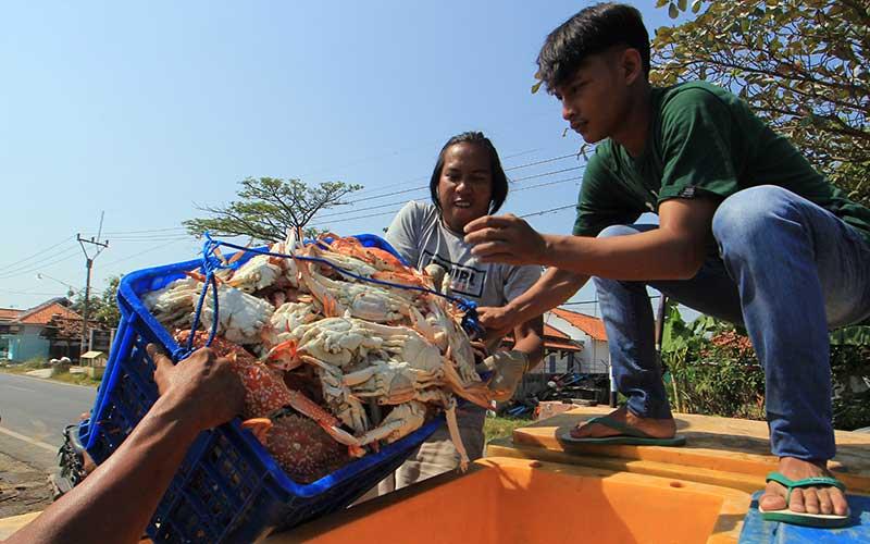 Pekerja mengangkut rajungan hasil tangkapan nelayan di Karangsong, Indramayu, Jawa Barat, Rabu (1/7/2020). Badan Pusat Statistik (BPS) mencatat ekspor rajungan saat pandemi COVID-19 pada triwulan pertama 2020 mencapai US$ 105,32 juta. ANTARA FOTO/Dedhez Anggara