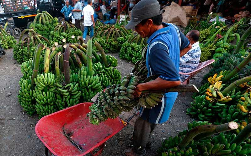 Pedagang kaki lima menata pisang untuk dijajakan di pasar Lambaro, Aceh Besar, Aceh, Kamis (16/7/2020). ANTARA FOTO/Irwansyah Putra