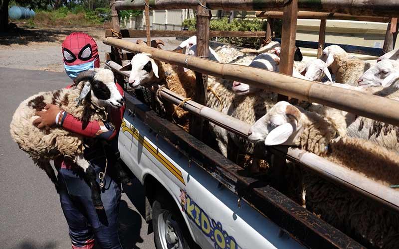Relawan berkostum tokoh superhero Spiderman membawa hewan kurban untuk disalurkan kepada pengurus Yayasan Lentera Solo, Jawa Tengah, Kamis (30/7/2020). Aksi tersebut untuk berbagi kebaikan kepada anak-anak pengidap HIV/AIDS yang menghuni rumah singgah Yayasan Lentera Solo pada momen Hari Raya Idul Adha 1441 H mendatang. ANTARA FOTO/Maulana Surya