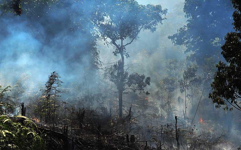 Asap mengepul akibat kebakaran lahan, di Kerinci, Jambi, Sabtu (8/8/2020). Gubernur Jambi Fachrori Umar menyebutkan sebanyak 258 desa di sejumlah kabupaten di provinsi itu berstatus daerah rawan kebakaran hutan dan lahan (karhutla). ANTARA FOTO/Wahdi Septiawan