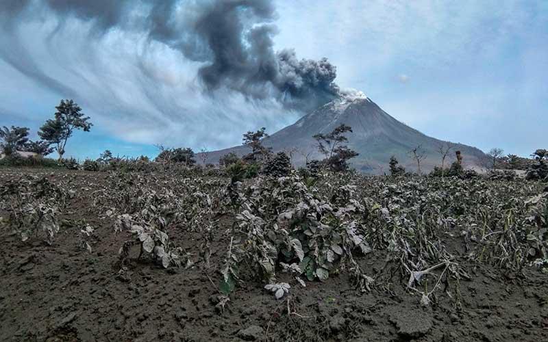 Gunung Sinabung menyemburkan material vulkanik saat erupsi di Desa Suka Tepu, Karo, Sumatera Utara, Jumat (14/8/2020). ANTARA FOTO/Tibta Peranginangin