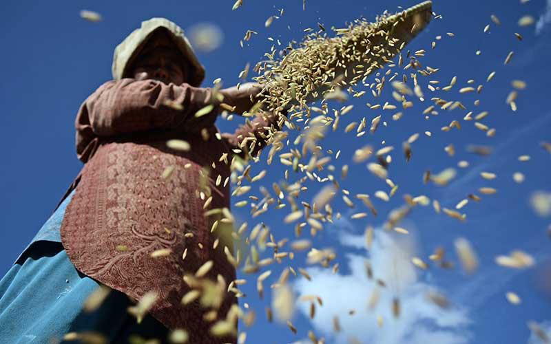 Buruh tani membersihkan gabah saat panen di area persawahan Tarogong Kaler, Kabupaten Garut, Jawa Barat, Rabu (16/9/2020). Badan Pusat Statistik (BPS) menyebut upah nominal harian buruh tani nasional pada Agustus 2020 naik sebesar 0,12 persen atau Rp55.677 dibanding Juli 2020 sebesar Rp55.613 per hari yang disebabkan indeks konsumsi di pedesaan mengalami deflasi 0,28 persen. ANTARA FOTO/Candra Yanuarsyah