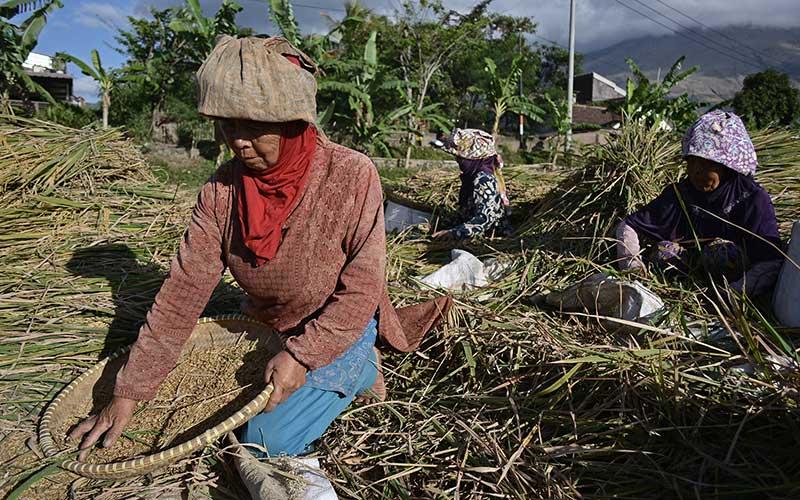 Sejumlah buruh tani membersihkan gabah saat panen di area persawahan Tarogong Kaler, Kabupaten Garut, Jawa Barat, Rabu (16/9/2020). Badan Pusat Statistik (BPS) menyebut upah nominal harian buruh tani nasional pada Agustus 2020 naik sebesar 0,12 persen atau Rp55.677 dibanding Juli 2020 sebesar Rp55.613 per hari yang disebabkan indeks konsumsi di pedesaan mengalami deflasi 0,28 persen. ANTARA FOTO/Candra Yanuarsyah