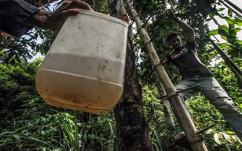 Petani menurunkan jeregen berisikan air nira dari pohon aren di perbatasan Desa Blang Weu Baroh, Lhokseumawe, Aceh, Kamis (15/10/2020).  Air nira  dapat dikumpulkan Lima sampai Delapan liter per hari dan dijual Rp10.000 per botol isi 500 ml. ANTARA FOTO/Rahmad