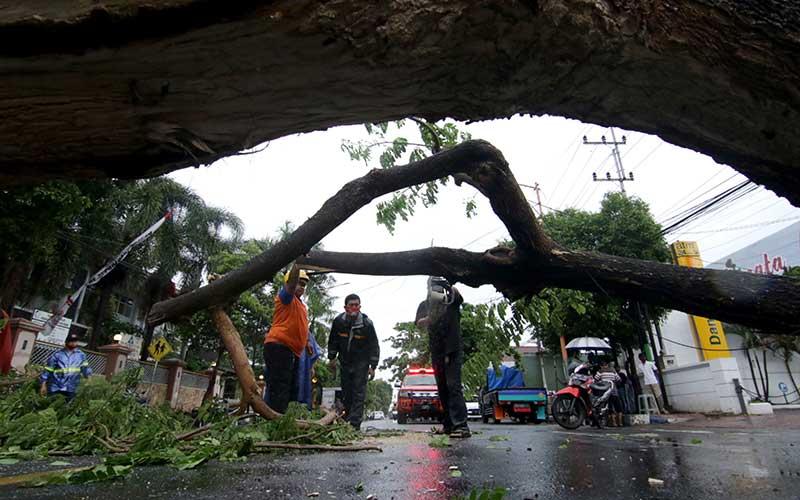 Pengendara sepeda motor melintasi trotoar saat Petugas Badan Penanggulangan Bencana Daerah (BPBD) memotong pohon tumbang yang menutupi badan jalan di Banyuwangi, Jawa Timur, Sabtu (5/12/2020). Hujan deras disertai angin kencang yang terjadi di Banyuwangi,  mengakibatkan sejumlah pohon tumbang menutupi badan jalan dan mengganggu arus lalulintas. ANTARA FOTO/Budi Candra Setya