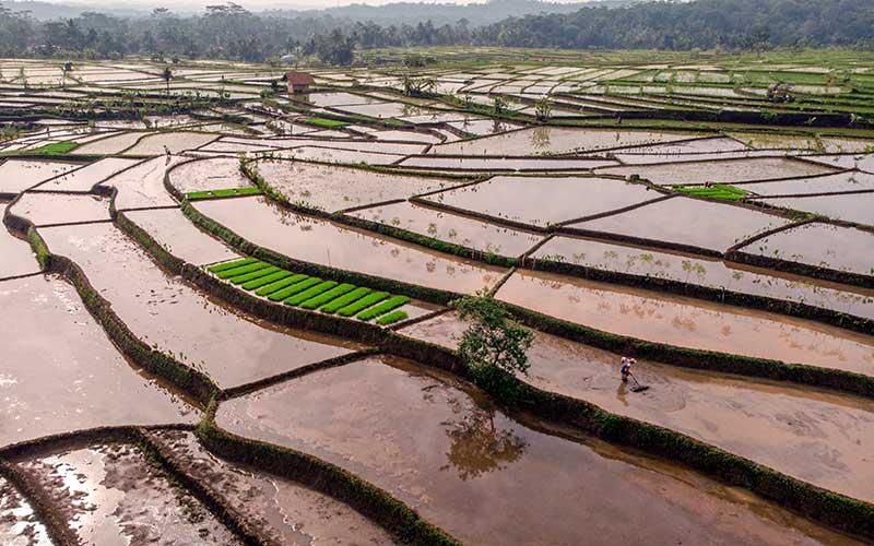 Foto udara lahan pertanian saat musim tanam padi di Desa Darmaraja, Kabupaten Ciamis, Jawa Barat, Sabtu (23/1/2021). Kementerian Pertanian mengupayakan untuk meningkatkan alokasi Kredit Usaha Rakyat (KUR) sektor pertanian untuk tahun anggaran 2021 sebesar Rp70 triliun dari sebelumnya Rp50 triliun, agar bisa mendorong revitalisasi alat dan mesin pertanian yang berguna dalam peningkatan efisiensi biaya produksi. ANTARA FOTO/Adeng Bustomi