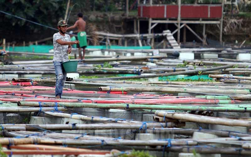 Peternak ikan memberimakan ikan di karamba di aliran Sungai Jeneberang, Makassar, Sulawesi Selatan, Minggu (24/1/2021). Kementerian Kelautan dan Perikanan menyatakan pengembangan sub-sektor perikanan budidaya menjadi prioritas utama saat ini. Bisnis/Paulus Tandi Bone