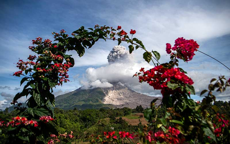 Gunung Sinabung menyemburkan material vulkanik saat erupsi di Desa Tigapancur, Simpang Empat, Karo, Sumatera Utara, Kamis (25/2/2021).  Gunung Sinabung erupsi dengan tinggi kolom 1.500 meter di atas puncak atau sekitar 3.960 meter di atas permukaan laut. ANTARA FOTO/Nova Wahyudi