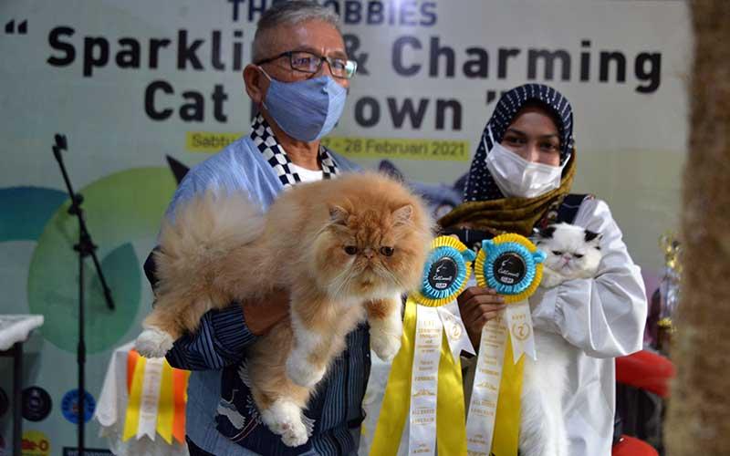 Seorang juri (kiri) memperlihatkan jenis kucing persia seusai penjurian pada kegiatan 'The Hobbies Sparkling and Charming Cat in Town' di Banda Aceh, Minggu (28/2/2021). Kegiatan kontes kucing itu bertujuan mewujudkan kota Banda Aceh sebagai kota gemilang yang ramah kucing dan peduli terhadap kesehatan hewan peliharaan lainnya. ANTARA FOTO/Ampelsa