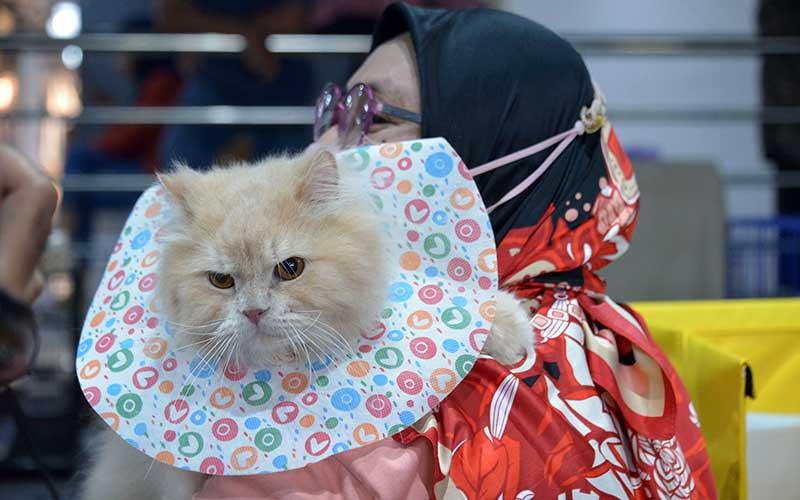 Peserta membawa jenis kucing ras campuran saat berlangsung kontes kucing  di Banda Aceh, Minggu (28/2/2021). Kegiatan kontes kucing yang diikuti sejumlah peserta cat show kelas domestik dan cat show kelas ras murni (all breed) itu bertujuan mewujudkan kota Banda Aceh sebagai kota gemilang yang  ramah kucing dan peduli terhadap kesehatan hewan peliharaan lainnya. ANTARA FOTO/Ampelsa