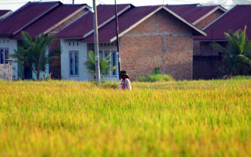 Petani beraktivitas di sawah yang hampir panen di kawasan pertanian Sungai Lareh, Kecamatan Koto Tangah, Kota Padang, Sumatra Barat, Selasa (2/3/2021). BPS Provinsi Sumatra Barat mencatat telah terjadi penyusutan luas panen di Sumbar sepanjang tahun 2020 seluas 16 ribu hektare. Sementara tahun 2020 luas panen hanya 295,66 ribu hektare, dan tahun 2019 luasnya itu mencapai 311,67 ribu hektare. Bisnis/Noli Hendra